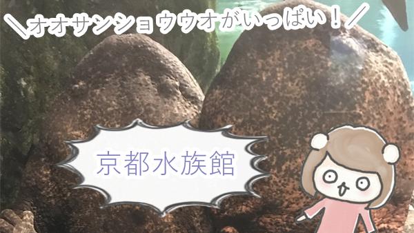 京都水族館に行ってきたよ。見どころは大量のオオサンショウウオ。